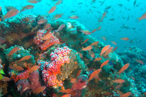 CORAL TRIANGLE DIVING SITES|...